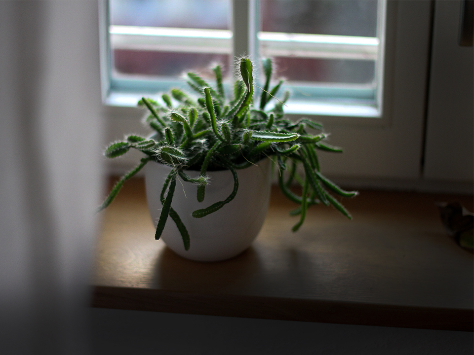 commercial window film for the fear that the film will block the sunlight, especially if there are indoor plants in your space. But will window tinting kill your indoor plants?